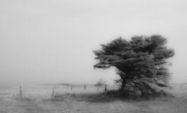 Træerne No. 10