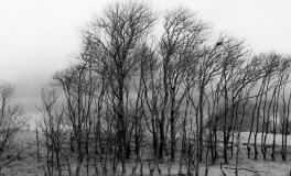 Træerne No. 2