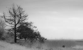 Træerne No. 4