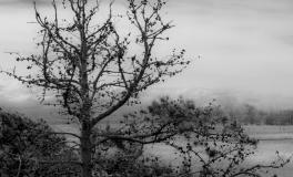 Træerne No. 5