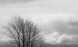Træerne No. 6