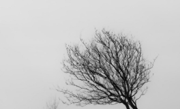 Træerne No. 7
