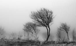 Træerne No. 8