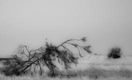 Træerne No. 9
